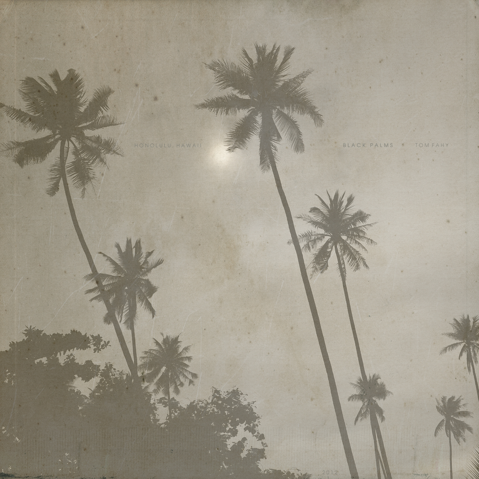 Black Palms, by Tom Fahy (2012)
