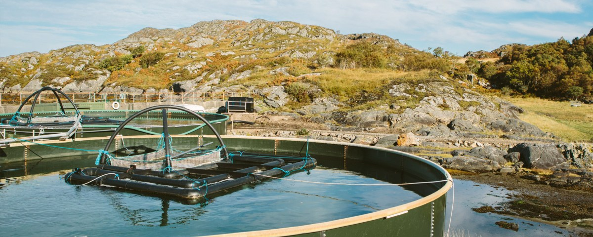 Biosecurity on Fish Farms