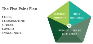 FAI Sheep - The Five Point Plan