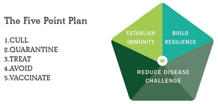 FAI Sheep - The Five Point Plan