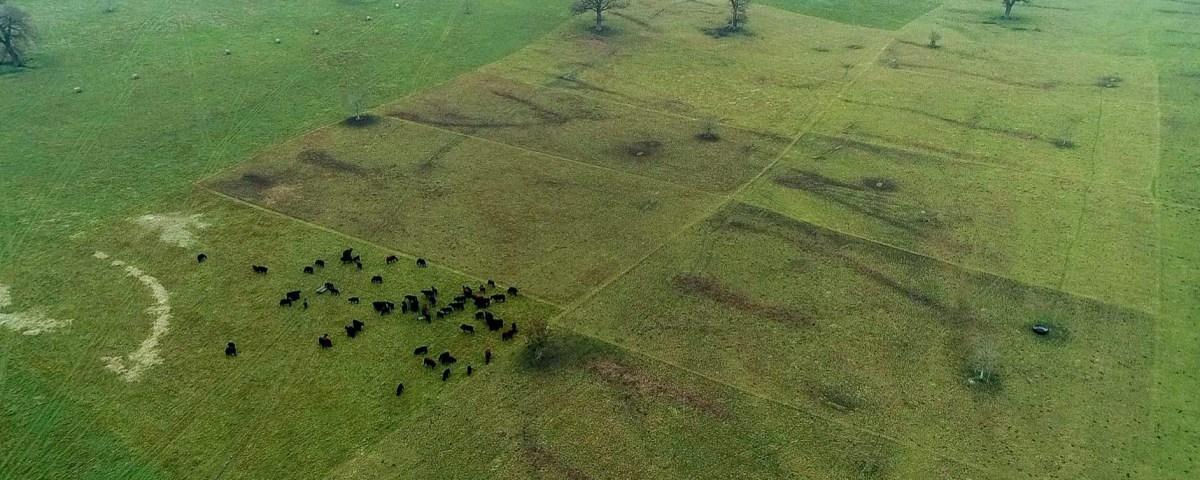 Regenerative Agriculture - FAI Farms