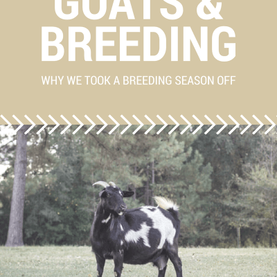 Goats and Breeding – Why we took a Breeding Season Off