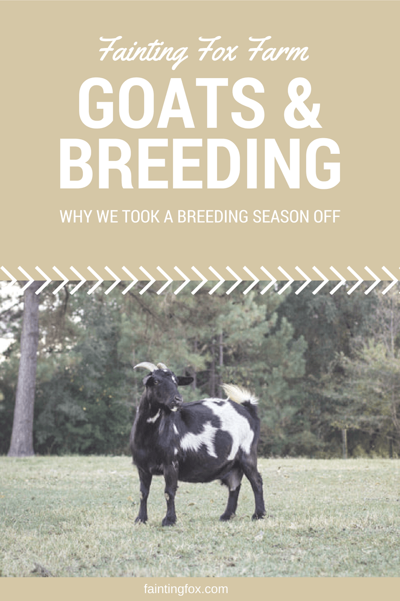 goats-breeding-profits