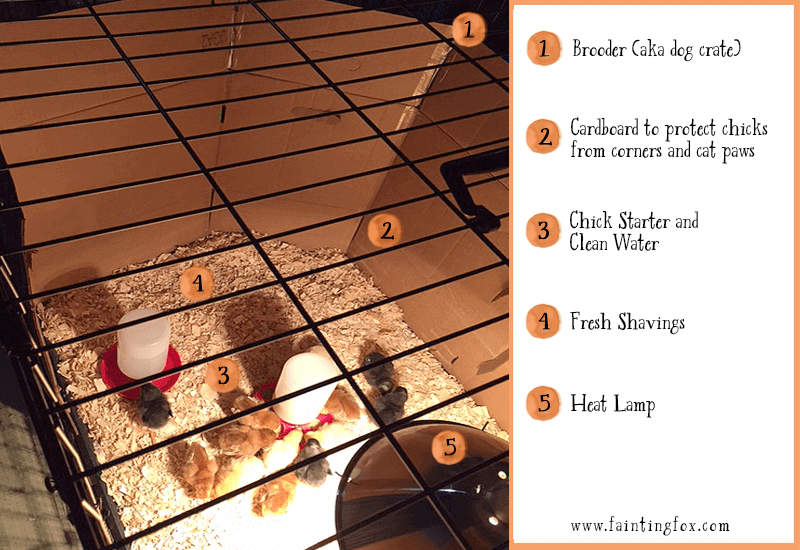 5 Must Have Supplies your New Chicks Need Before you Bring Them Home | Fainting Fox Farm