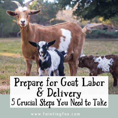 5 Crucial Steps to Prepare for Goat Labor and Delivery