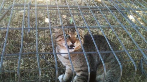 The government will encourage local communities to trap and humanely euthanise feral cats.