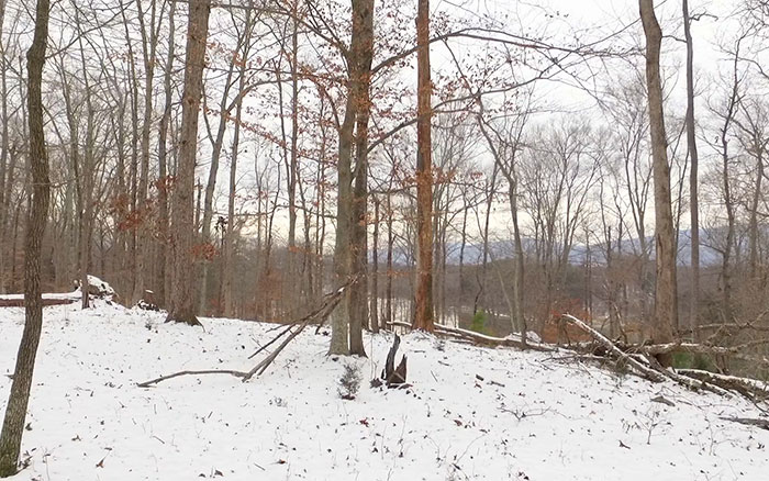 Available Land in Charlottesville Virginia, Views from Lot 4
