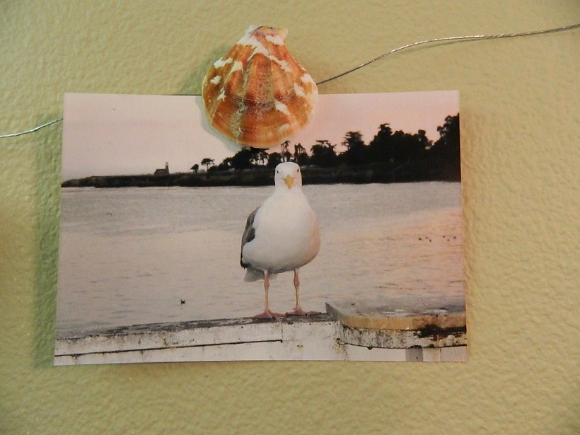 Seashell Picture Clips