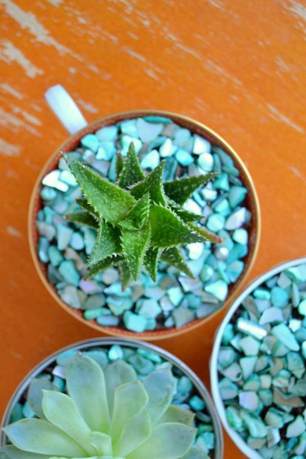 Tattooed Martha - Teacup Succulent Planters (5)