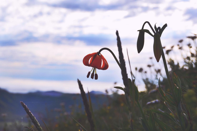 Exploring Oregon: Saddle Mountain