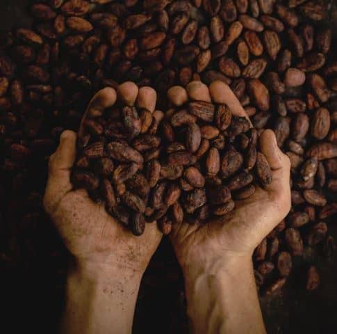 Hände mit Kakao Fairtrade