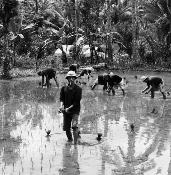 Bauern bei der Arbeit