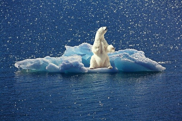 Polarbär auf Eisbrocken