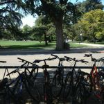 Davis is quite possibly the most bike-friendly town in the country.