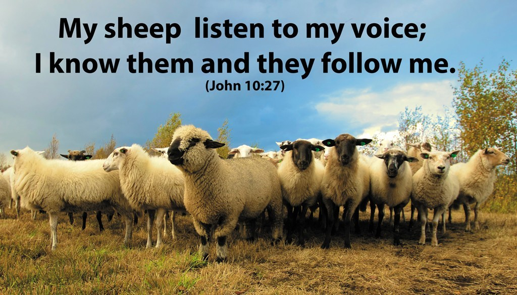 You are currently viewing The Good Shepherd