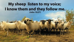 Read more about the article The Good Shepherd