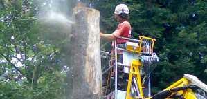 High access tree surgery
