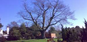 Private & Commercial tree surgery Worcestershire