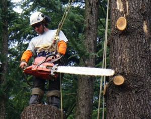 Tom Murray - Director of Faithful Tree Care, Worcester
