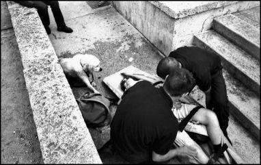 Marseille juillet 2004, personne ayant fait une chute, le chien désenparé sera accompagné dans la voiture de sa maitresse en attendant sont retour de l'hospital.