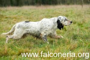DOG-06-JE0056-01P