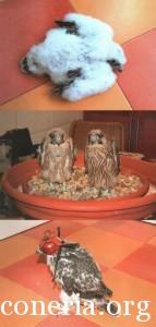 addestramento falconi altani 0005