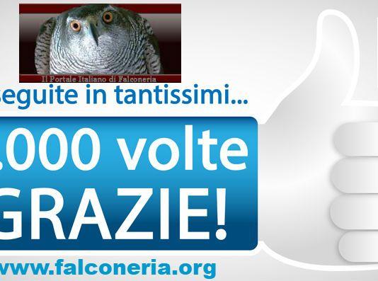 falconeriaorg