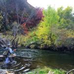 Fall is here!!!!! flyfishing utah flyfish orvis trout rivers utahflyfishing