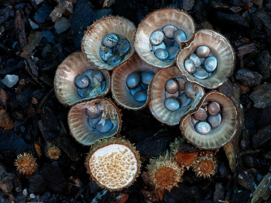 Funky-Porcini-photography-Steve-Axford