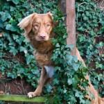 Zaki In the garden - 9 months