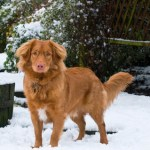 More snow - Zaki 10 months