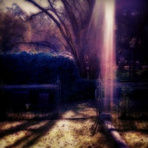 light in the graveyard