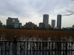 Uneo Lily Pads, in Shinobazu Pond, the Winter edition