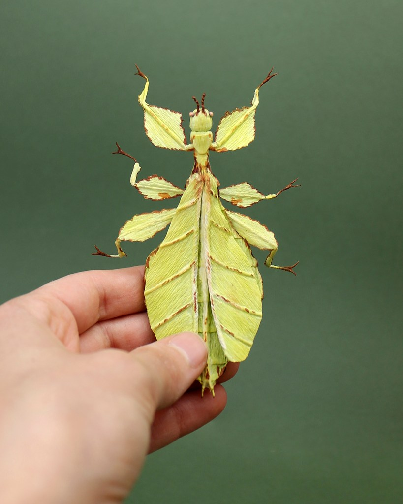 Crepe paper sculpture of a Leaf insect