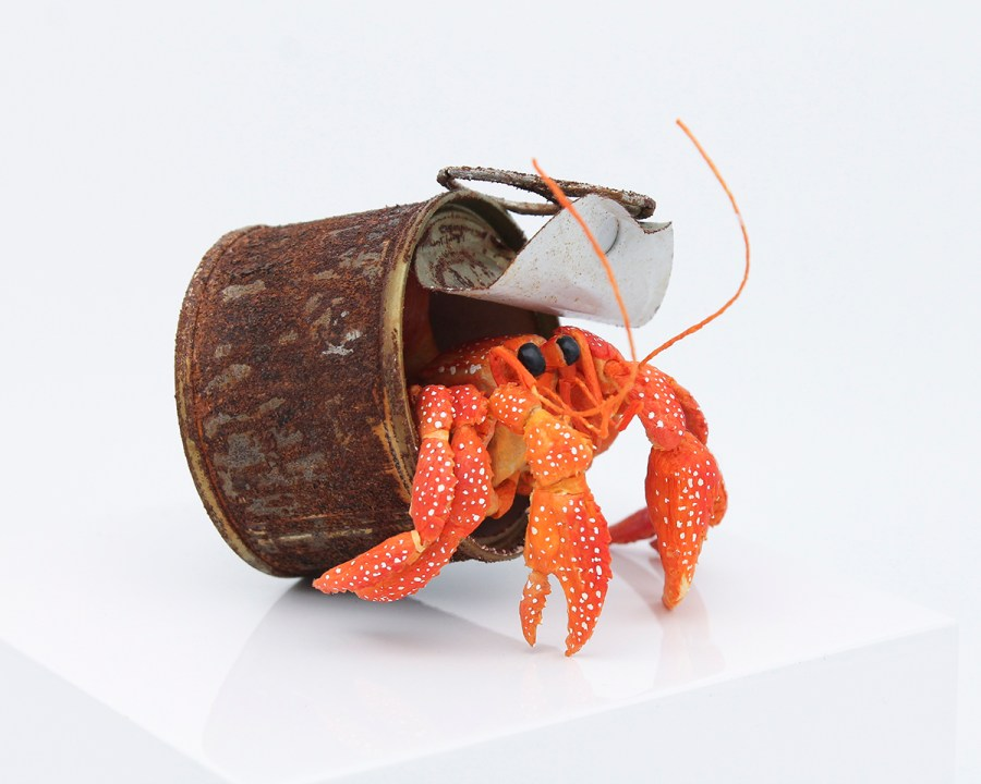 Hermit Crab living in Tin Can