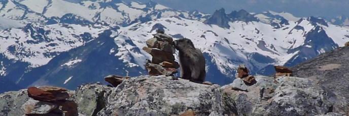 Ein Murmeltier auf dem Whistler Mountain - Wie hübsch es sich in Position gesetzt hat!