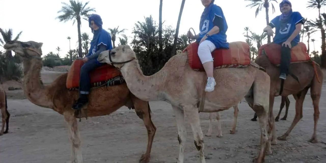 Faire une balade à dos de dromadaire dans la palmeraie de Marrakech
