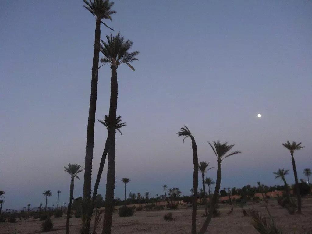 Palmeraie Marrakech crépuscule