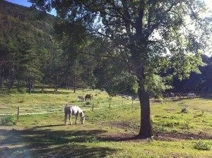Chevaux au bord du lac de St auban-famille nomade digitale