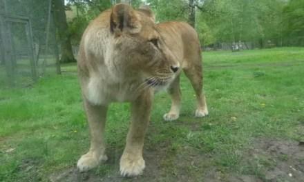 Sortie en famille : Le Parc Zoologique de Thoiry