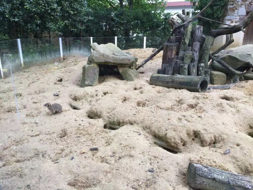 famille nomade digitale-Parc zoologique de Thoiry- suricate