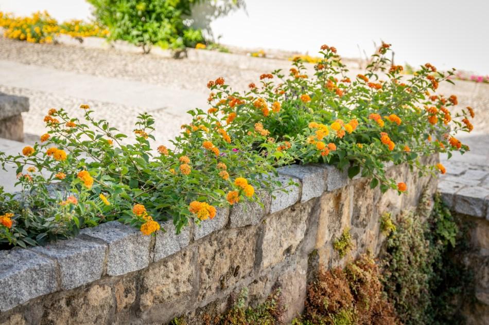 fleur de Cordoue