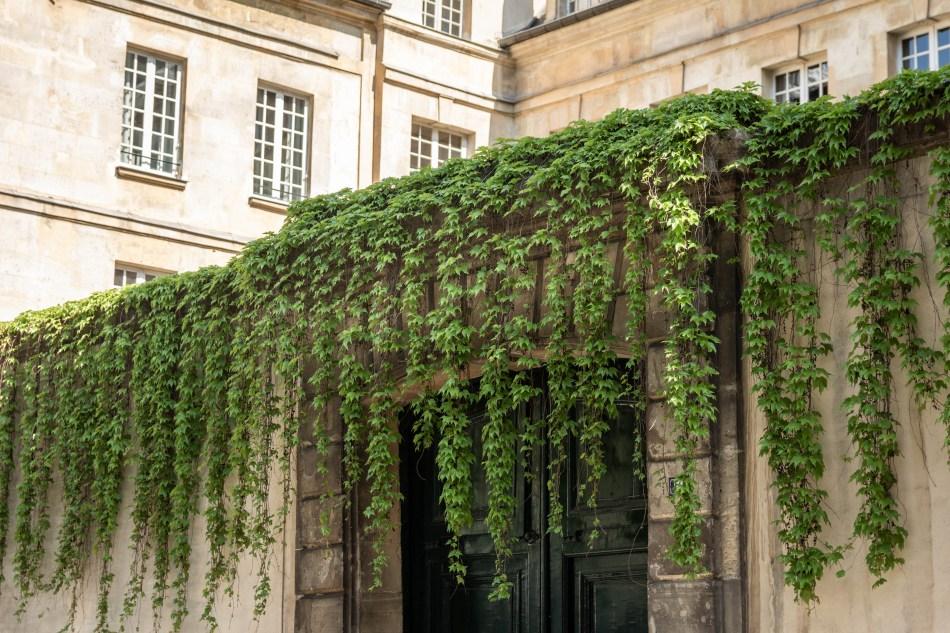 Lierre sur immeuble parisien