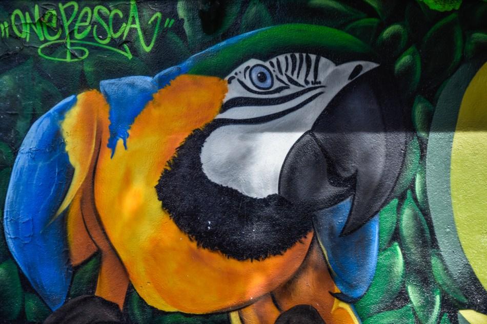 Perroquet Street art