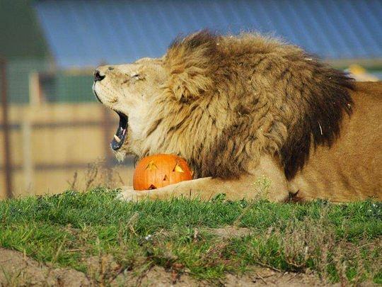 Halloween-Yorkshire-Wildlife-Park-2014-photo1