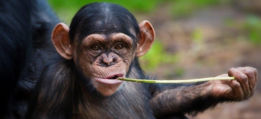 chester zoo voucher codes and discounts