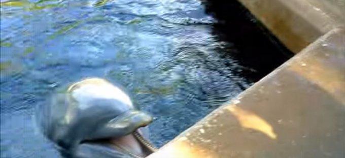 dolphin ipad seaworld