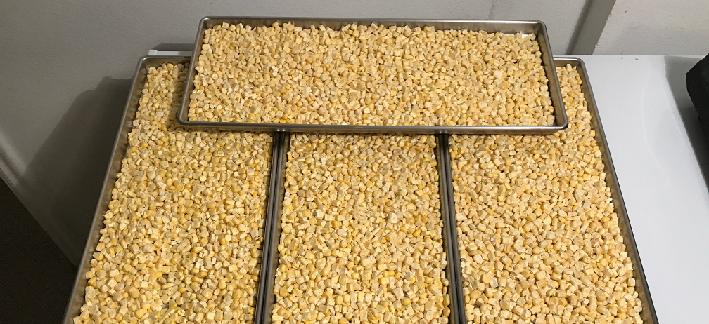 Frozen corn on 4 freeze dryer trays