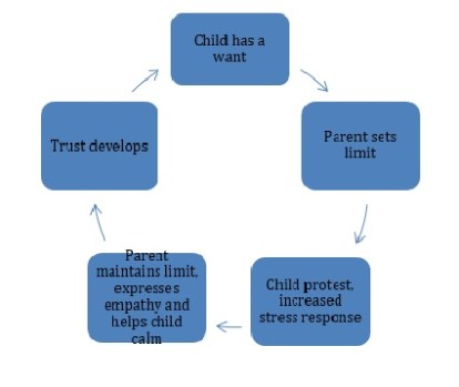 healthy second year attachment cycle