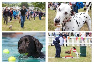 DogFest 2016 Family Clan Blog
